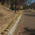 Photos: ビオラ_公園 D7692