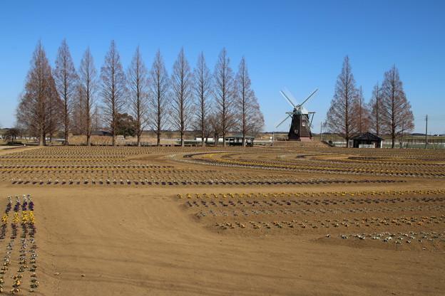 あけぼの山公園 D7735