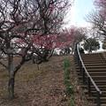 Photos: 梅林_公園 D7777