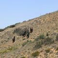 写真: 15-急斜面を登っていく