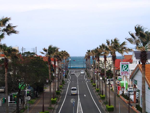 Photos: 夕映え通り