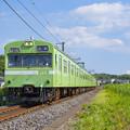 Photos: 黄緑6号
