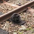 Photos: 線路と猫