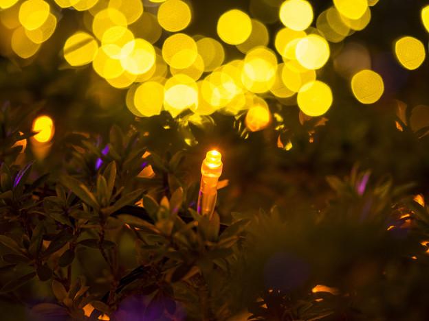 Photos: 点燈