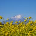 吾妻山からの富士
