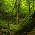 Photos: 初夏の森