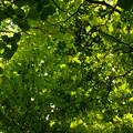 Photos: 緑の覆い
