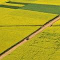 菜の花畑の一本の道