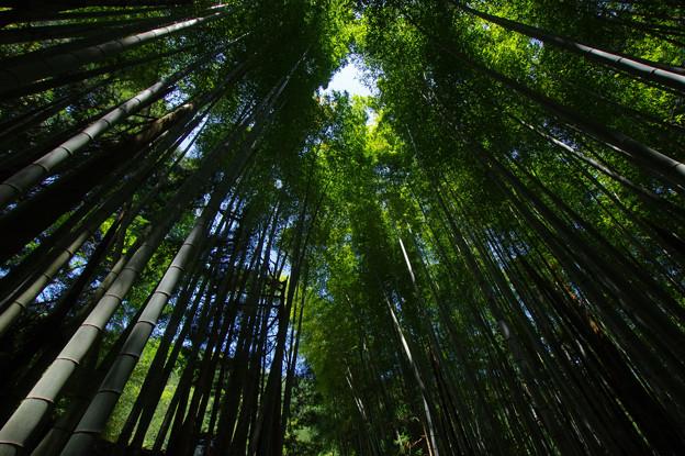 光射す竹林