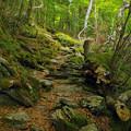 写真: 登り道