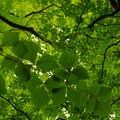 写真: 緑がいっぱい