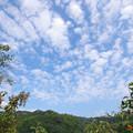 写真: ひつじ雲