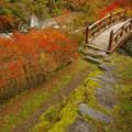 渓谷の小橋