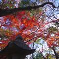 Photos: 参道の屋根