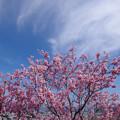 Photos: 春来る