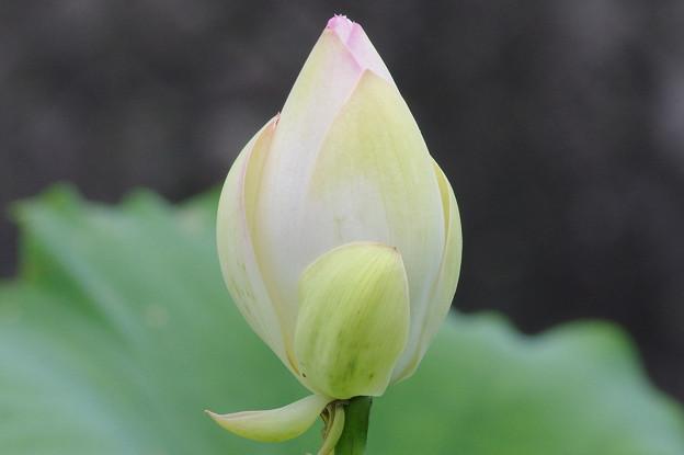 Photos: 明日に咲く