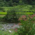 川岸の赤い花