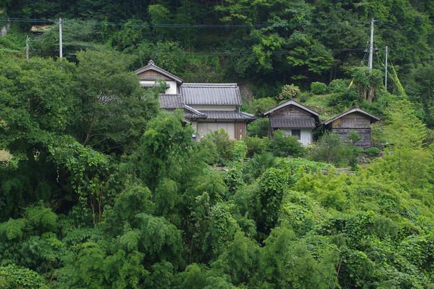 緑の中の一軒家