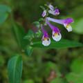 山路に咲く花
