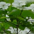 白花のスカーフ