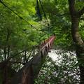 鉄錆色の吊り橋