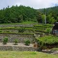 家横に茶畑