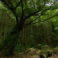 Photos: 村への標樹