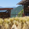 稲わら景色