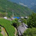 茶畑の家々
