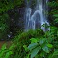 Photos: 堂林の滝