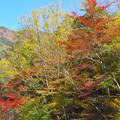 秋色スカイライン2