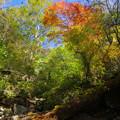 スカイライン秋の森