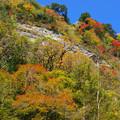 Photos: 紅葉の崖