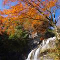 秋空を仰ぐ
