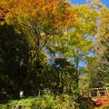 紅葉の小橋