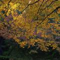 滝前の黄葉