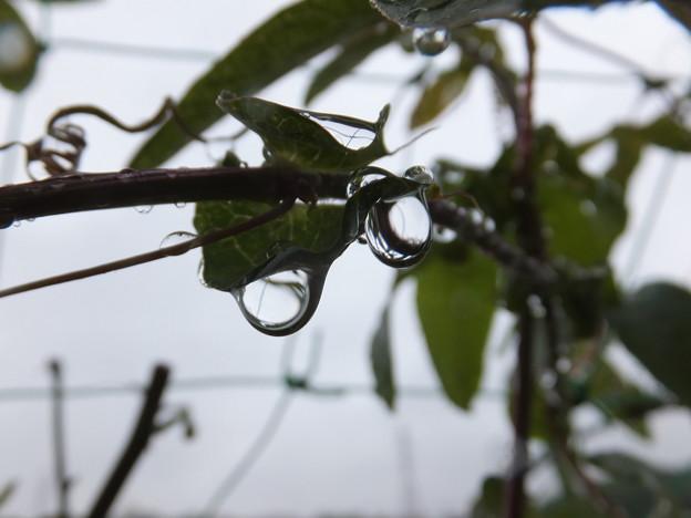 雨 しずく 水晶 トケイソウ