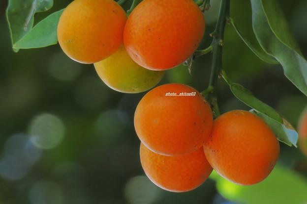 路傍畑の果実