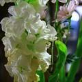 写真: 花に感謝を捧げ