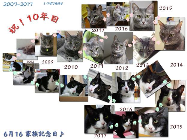 写真: 太郎と華のうちの子記念日♪