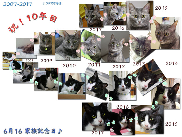 Photos: 太郎と華のうちの子記念日♪