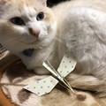 Photos: 飛ばせる雷鳥の折り紙と
