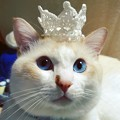 Photos: 王冠乗っけて