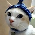 Photos: フード帽試着中