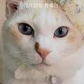 Photos: 猫の日記念