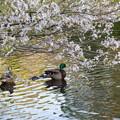 三ッ池公園にて