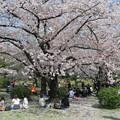 Photos: お花見ランチ