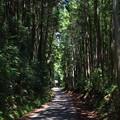 写真: 木洩れ日の道