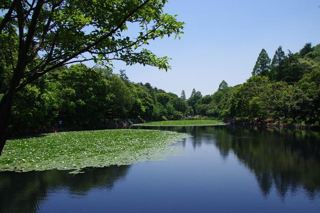 休日の三ッ池公園