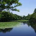 写真: 休日の三ッ池公園